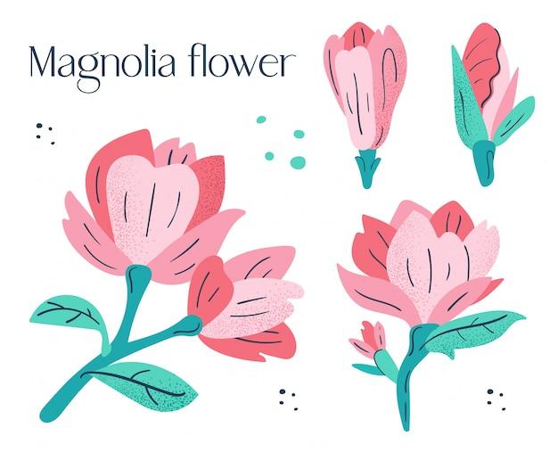 Ensemble de petites fleurs de magnolia rose.