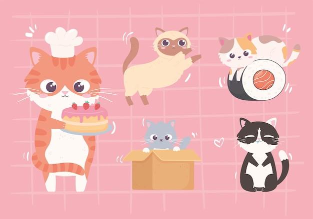 Ensemble de petits chatons mignons