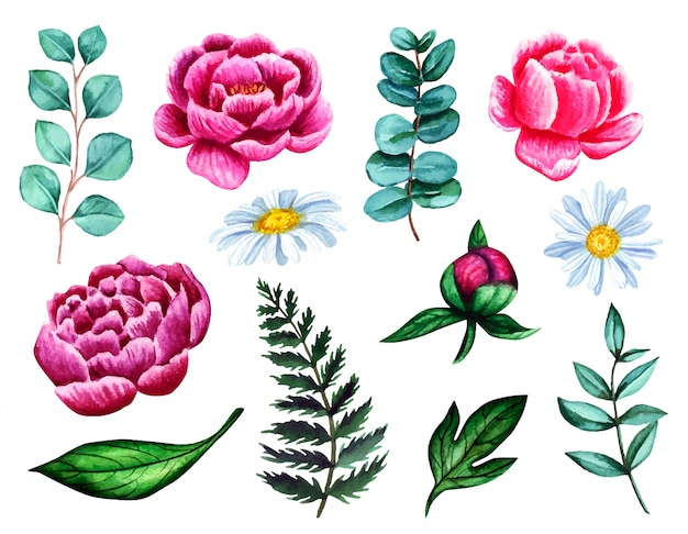 Ensemble de pivoines aquarelles, camomille, fougère, eucalyptus et feuilles isolés sur fond blanc. illustration de fleur