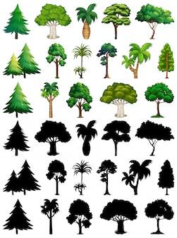 Ensemble de plante et arbre avec sa silhouette