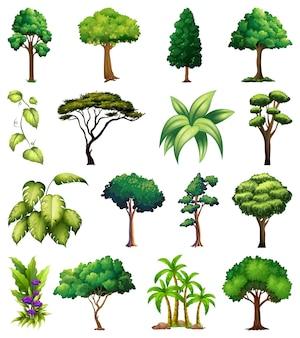 Ensemble de plantes et d'arbres variés