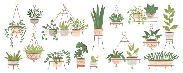 Ensemble de plantes dans des pots suspendus et des pots sur des stands home jungle