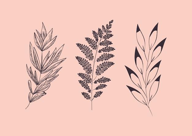 Ensemble de plantes dessinées botaniques