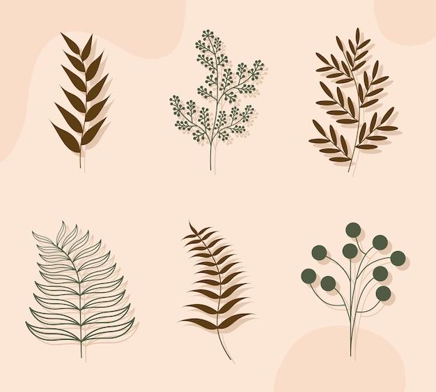 Ensemble de plantes esthétiques