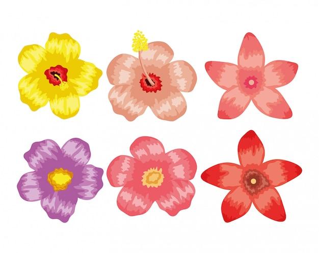 Ensemble de plantes de fleurs tropicales