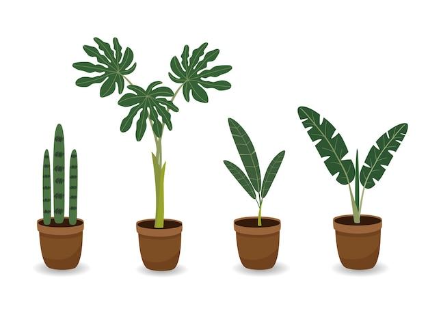 Ensemble de plantes d'intérieur dans des pots de fleurs ensemble de plantes en pot jardin avec palmiers