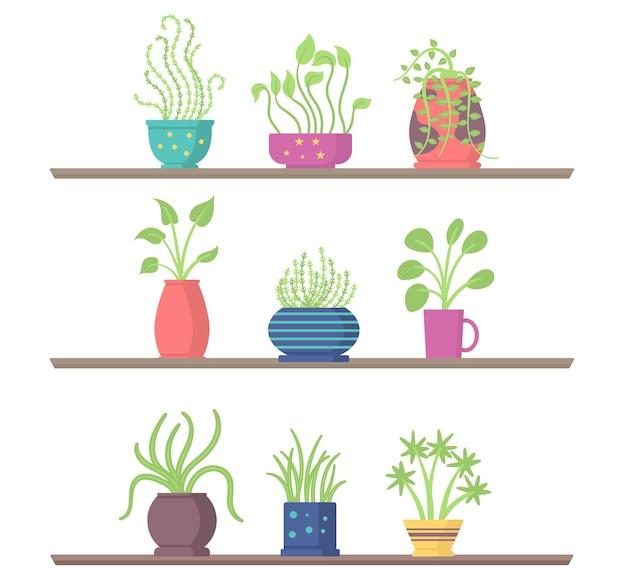 Ensemble de plantes d'intérieur sur des étagères pot de fleurs de jardin pour la chambre ou le bureau et l'intérieur de la maison verte