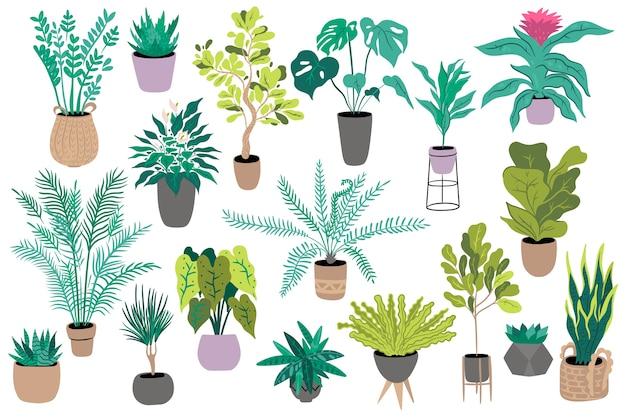 Ensemble de plantes d'intérieur isolé sur fond blanc.