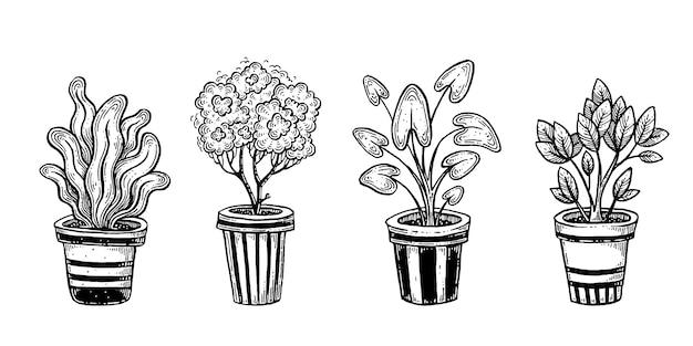 Ensemble de plantes d'intérieur.