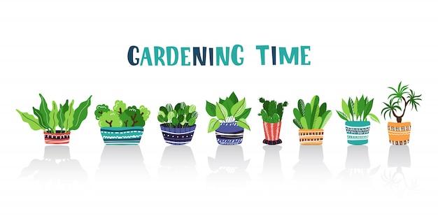 Ensemble de plantes en pot à la maison