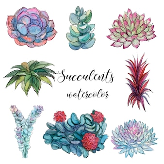 Ensemble de plantes succulentes. aquarelle. graphique.