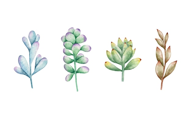 Ensemble de plantes succulentes dessinées à la main aquarelle