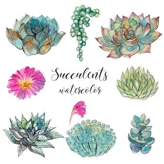 Ensemble de plantes succulentes