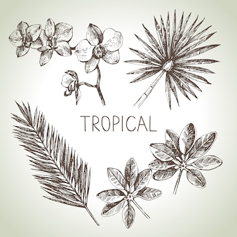 Ensemble de plantes tropicales de croquis dessinés à la main. illustration