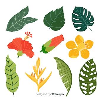 Ensemble de plantes tropicales dessinés à la main