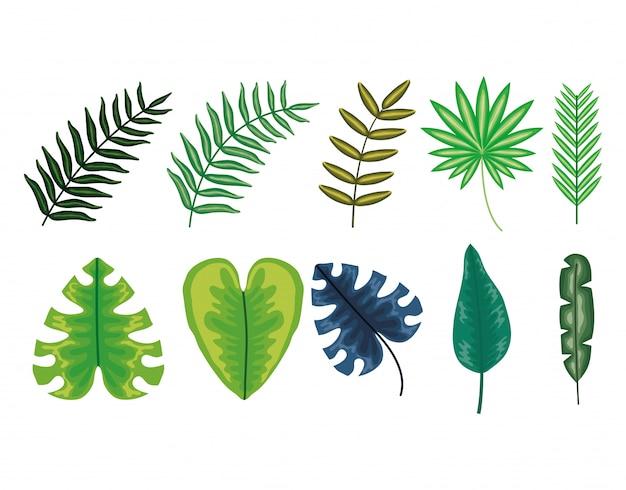 Ensemble de plantes tropicales de feuilles