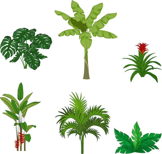 Ensemble de plantes tropicales