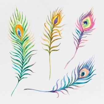 Ensemble de plumes de paon aquarelle colorée
