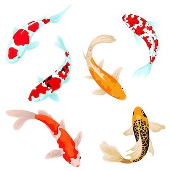 Ensemble de poissons carpes koi. сollection de poissons ornementaux asiatiques pour un étang. vue de dessus du poisson.