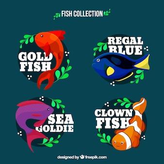 Ensemble de poissons colorés dans différentes espèces