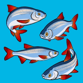Ensemble de poissons de gardon pour la collection de gamefish