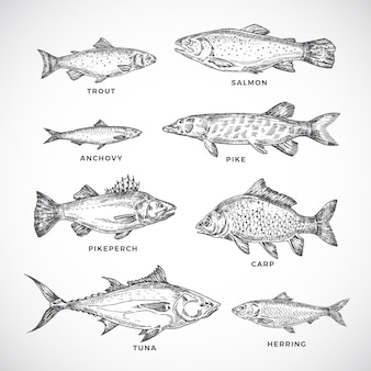 Ensemble de poissons océan ou mer et rivière dessinés à la main.