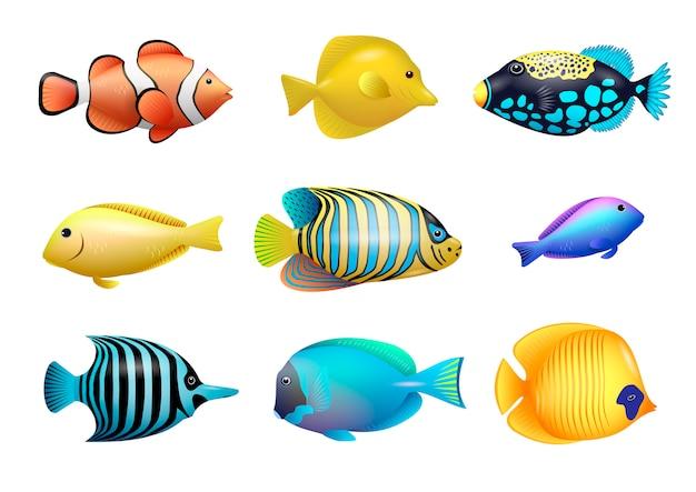 Ensemble de poissons tropicaux