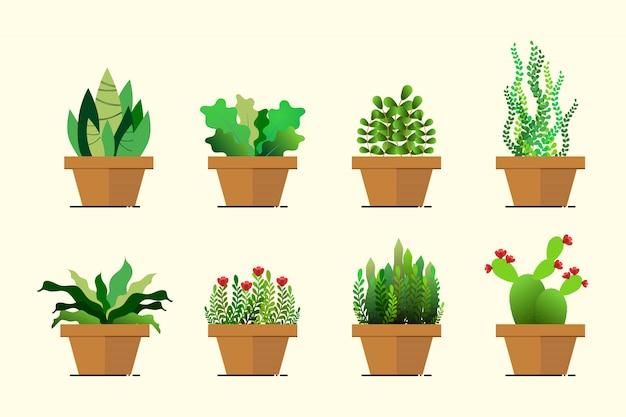 Ensemble de pot de plante verte