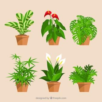 Ensemble de pots et des fleurs de fleurs décoratives