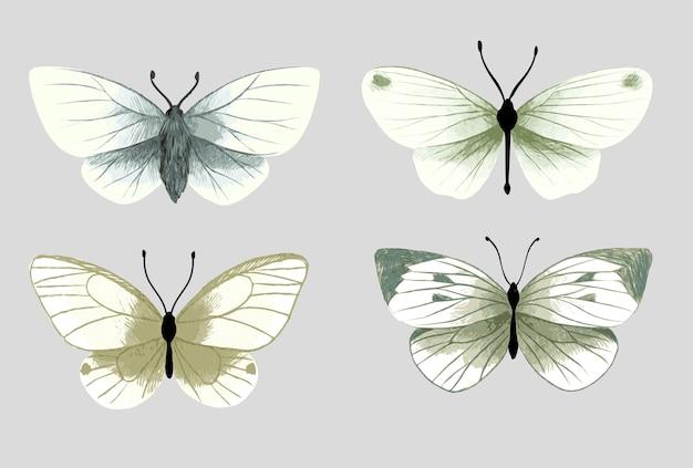 Ensemble de quatre papillons aquarelles, couleurs pastel tendres, illustration aquarelle dessinée à la main.