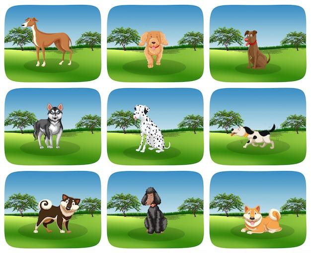 Ensemble de race de chien dans la nature