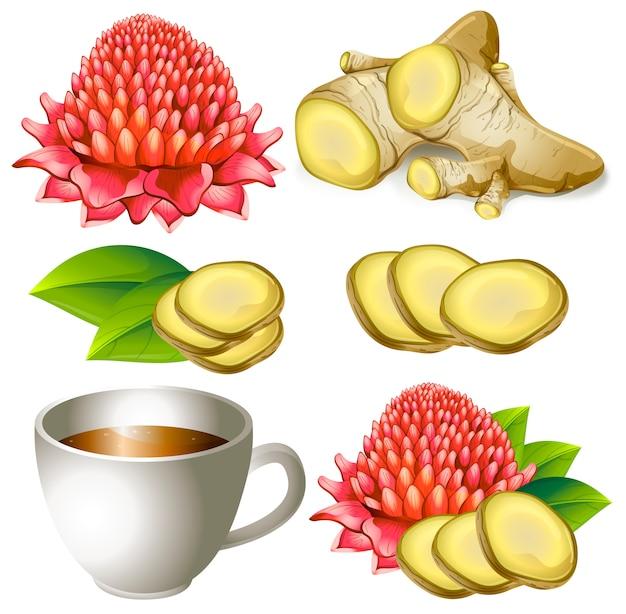 Ensemble de racine de gingembre avec une fleur et une tasse de thé