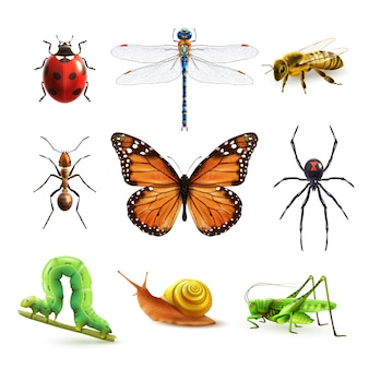 Ensemble réaliste d'insectes