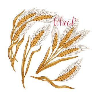 Ensemble de récolte de céréales oreilles de pain de blé