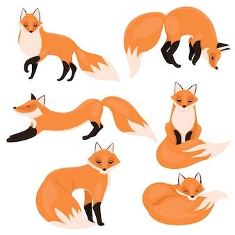 Ensemble de renards isolés