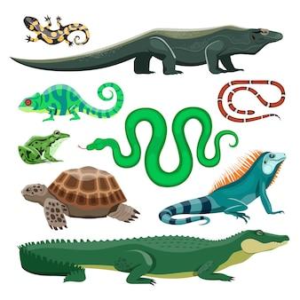 Ensemble de reptiles et d'amphibiens