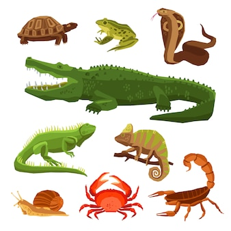 Ensemble de reptiles et amphibiens