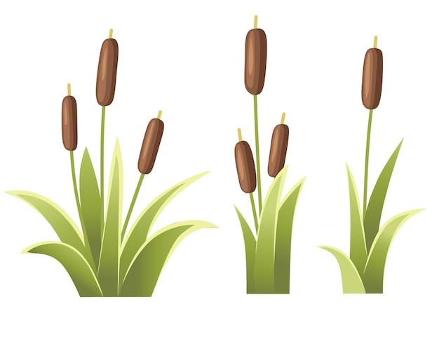 Ensemble, de, roseaux, dans, herbe verte, plante, roseau, vert, marais, canne, herbe, illustration