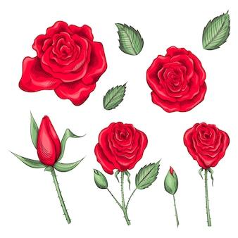 Ensemble de roses, boutons de roses et feuilles dessinés à la main
