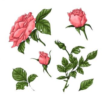 Ensemble de roses de corail