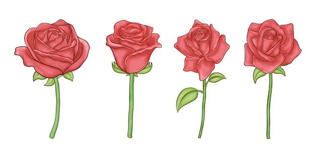 Ensemble De Roses Dessinées à La Main Vecteur Premium