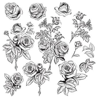 Ensemble de roses esquisse avec des feuilles
