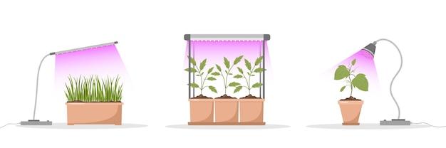 Ensemble de semis de printemps sous lampe phyto.
