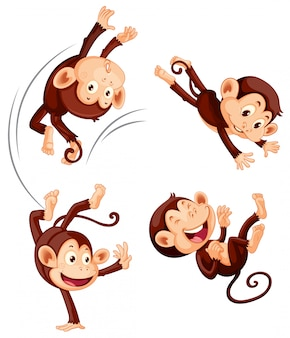 Un ensemble de singe sur fond blanc