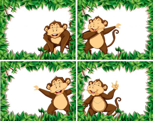 Ensemble de singes dans des cadres de la nature
