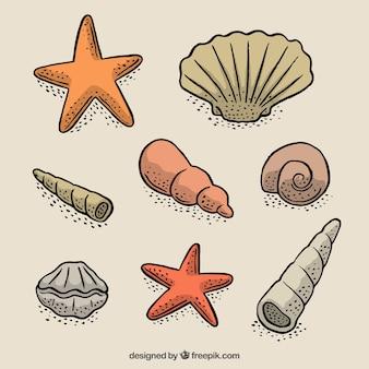 Ensemble de starfishes dessinés à la main avec des coquillages