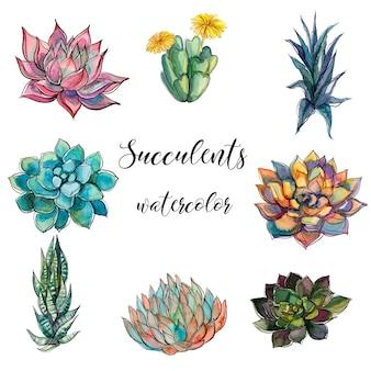 Ensemble de succulentes aquarelles