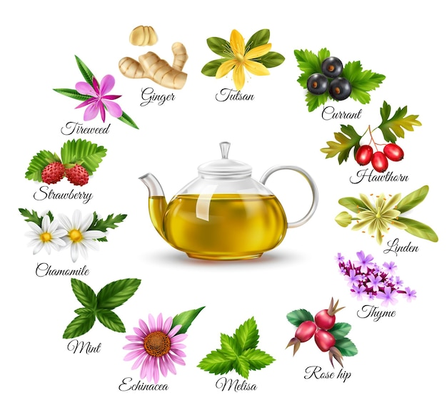 Ensemble de thé vert aux herbes avec des baies isolées réalistes