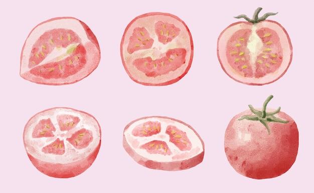 Ensemble de tomates aquarelles