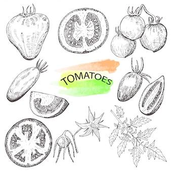 Ensemble de tomates dessinées à la main isolé sur fond blanc.
